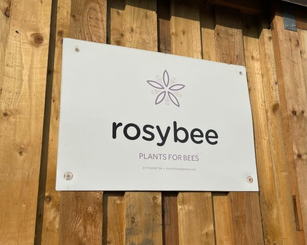 plants for bees